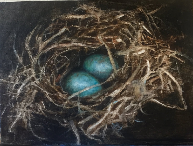 bird eggs in nest blue
